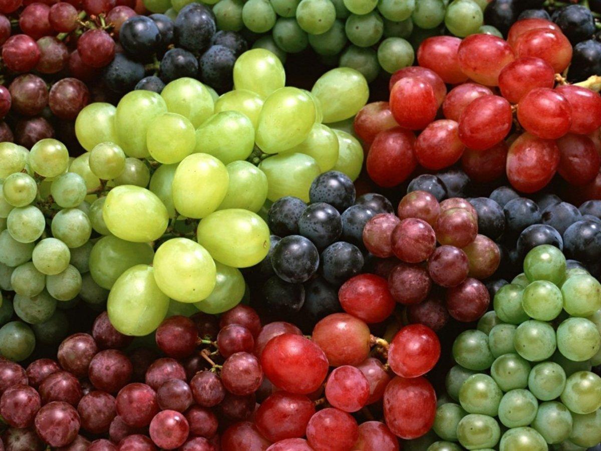 Сорта винограда для средней полосы